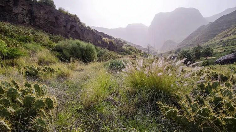 Il Parque Natural Tamadaba