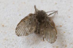 Rioolvliegjes in huis? Motmuggen in de badkamer? Een aantal tips!