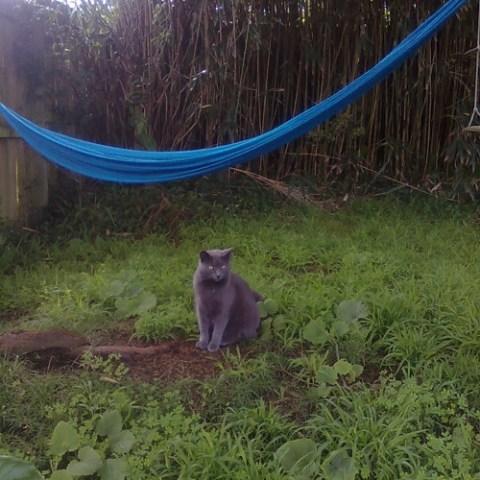 Cat under a hammock