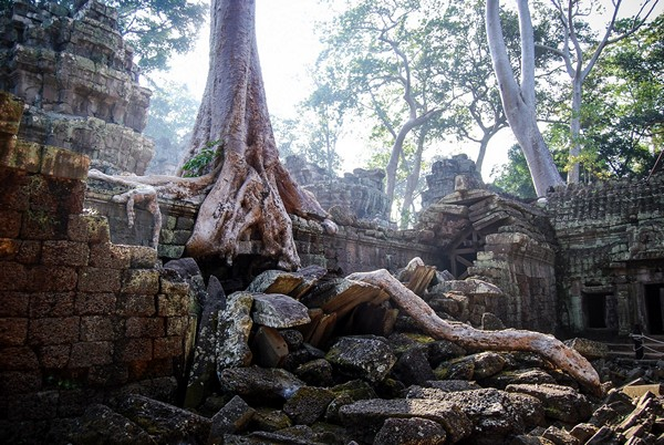 Photo Ta Prohm Angkor Vat Cambodge