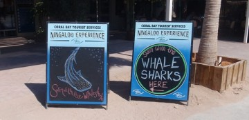 requins baleins australie