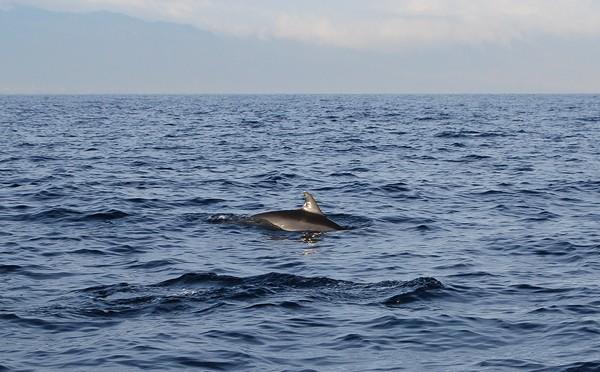 photo dauphins bali indonésie