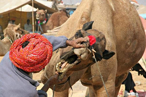 foire aux chameaux de Pushkar photos Inde