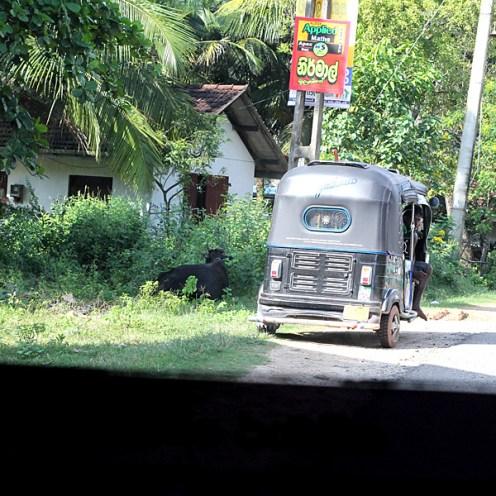 03Jan15Srilanka1