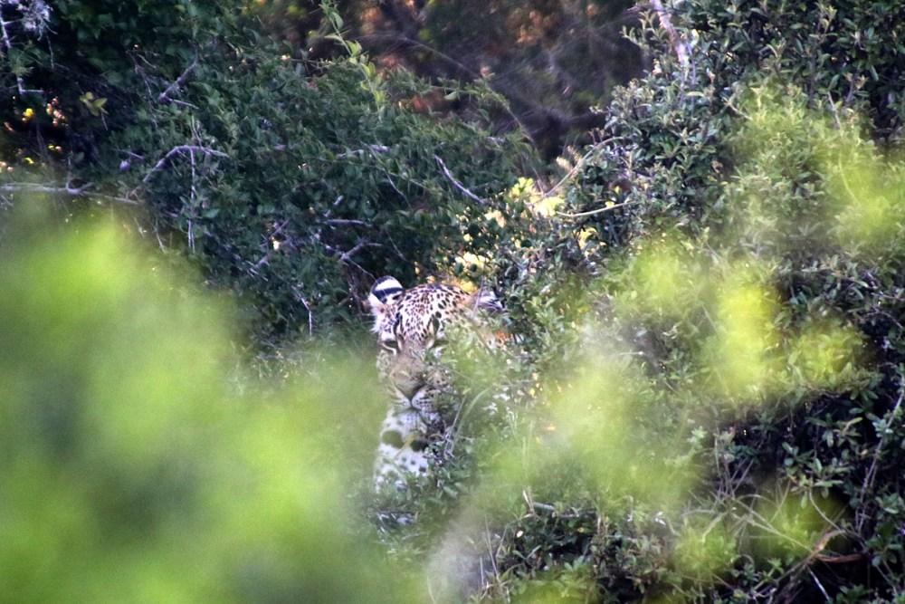 06Nov18Leopard2