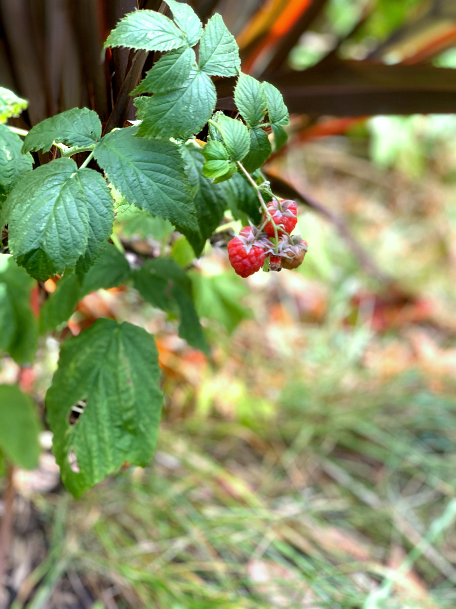 10July20Raspberry