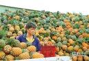 嘉義縣大林、民雄等地產銷失衡 1斤鳳梨換不到1顆水餃