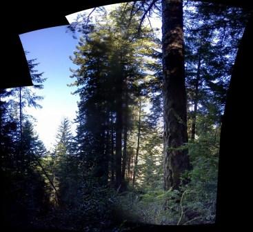 redwood stand 4