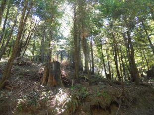 Pt.12.flat hillside from 3 old camp redwoods.2 (2)