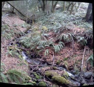 fern grove