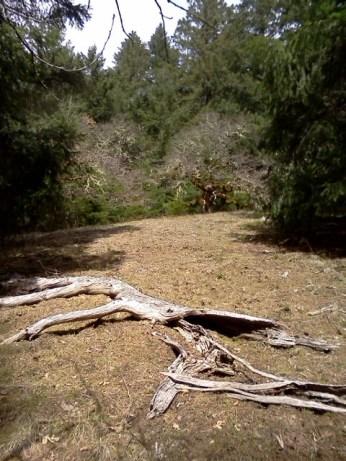 MR Dead Oak