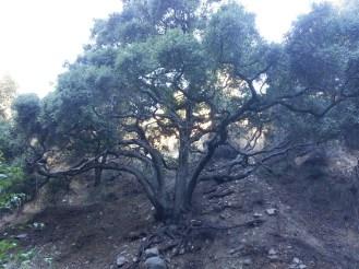 Pickens Canyon 03