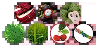 robusta ingredients