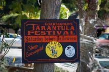 Tarantula Festival Coarsegold Ca Ordinary Resort