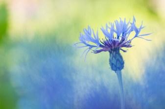blauwb