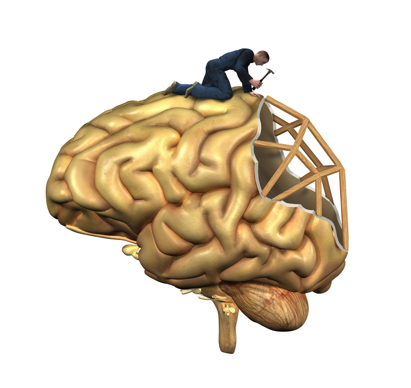 Lion's Mane Mushroom Review Shroomy Nerve Growth Factor