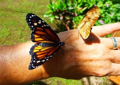 buttlerfly sanctuary -Ometepe