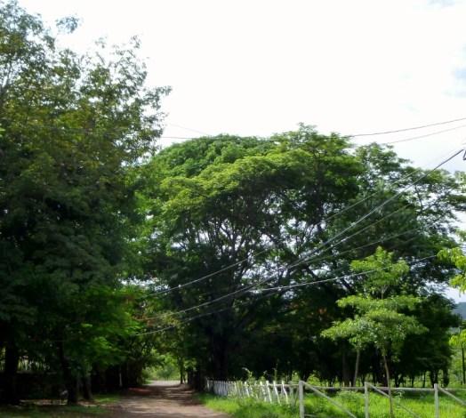 Country roads - Tamarindo