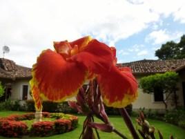 Flowers - Granada