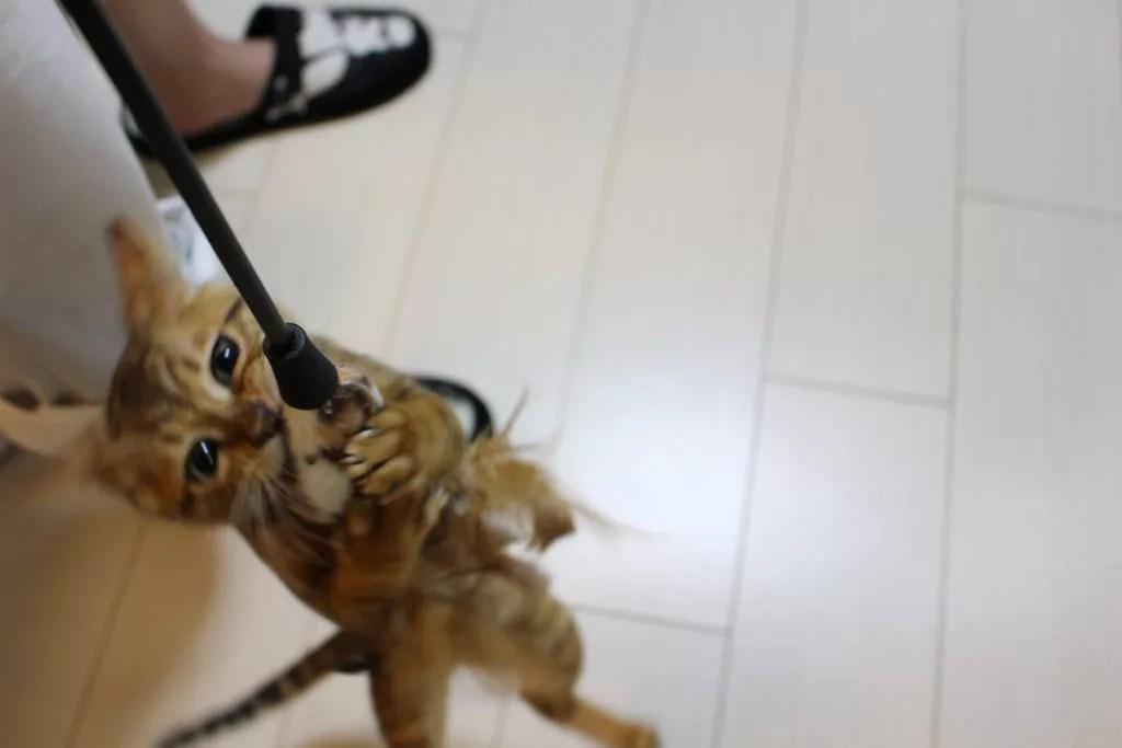 ペット撮影のために一眼レフ購入!!
