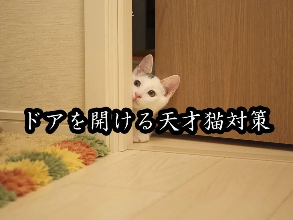 猫が扉を開けて脱走するのを防ぐ方法サムネイル