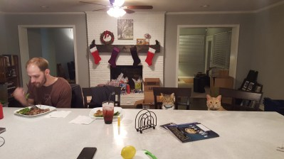 The cats feel right at home