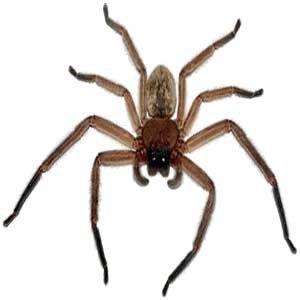 Resultado de imagen de araña