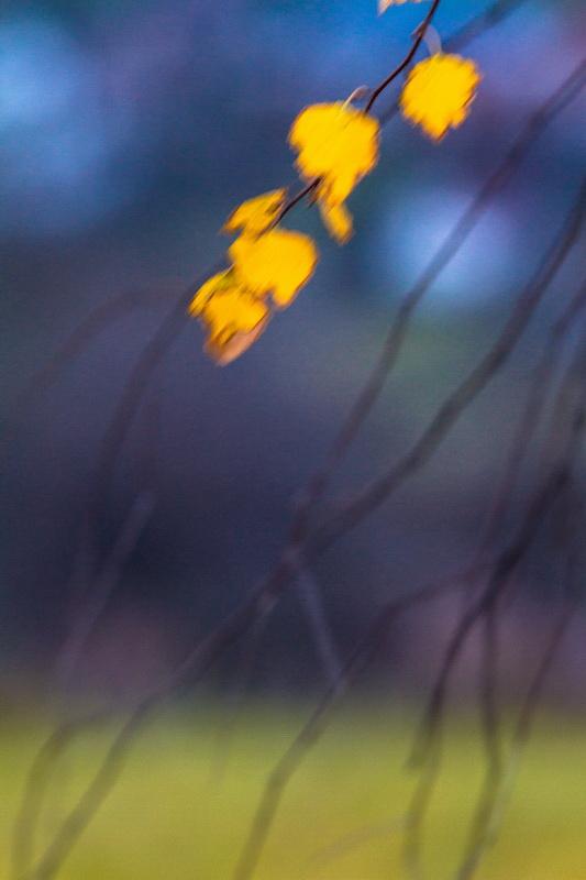 frunza-ramuri-blur
