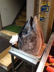 Huge tuna head at Tsukiji