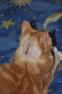 Max With Stitches