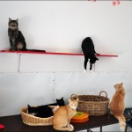 "Cats at ""Friends of Cats"" shelter"