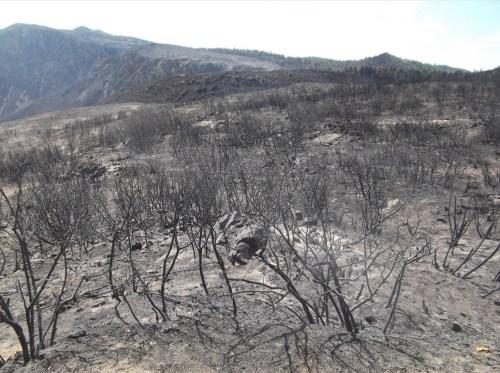 Laguna Fires 3