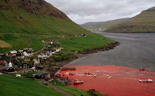 faroe-islands-whale1