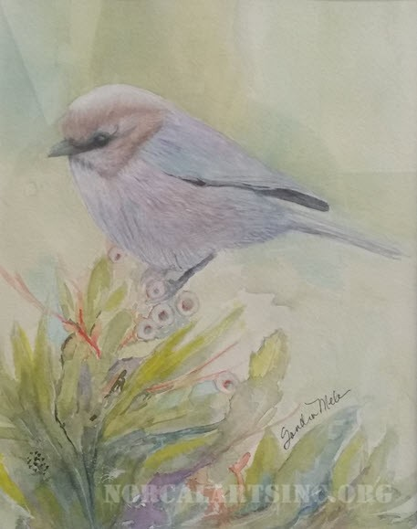 """Bushtit"" by Sandra Mele, transparent watercolor"