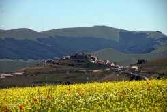 Fiori gialli e papaveri, vista Castelluccio di Norcia