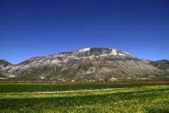 Fioritura e Monte Vettore a Castelluccio di Norcia