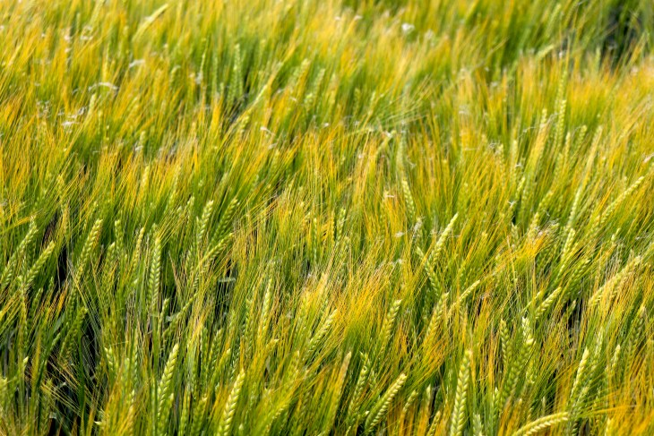 cereali-antichi-waldkorn-in-austria