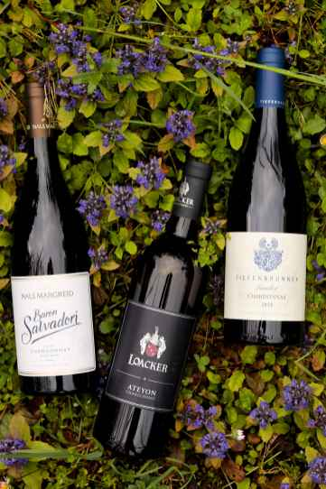 chardonnay vitigno altoatesino