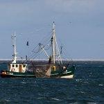 Kriterienkatalog für nachhaltigen und sozial gerechten Umbau der europäischen Fischerei veröffentlicht