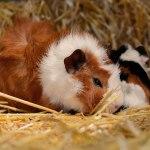 Haustier allein Zuhause: Wer Tiere hält, sollte für Notfälle vorsorgen