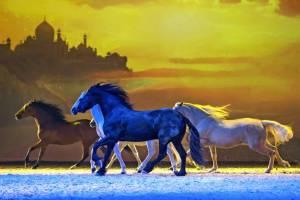 Pferdefreiheit (Bartolo Messina)