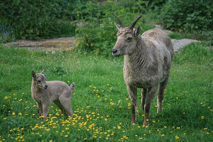 Tierpark Nordhessen