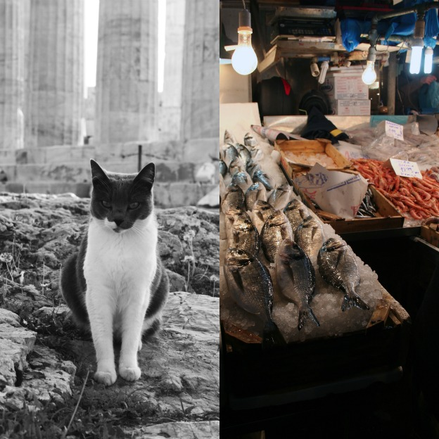 Cat at the Acropolis and the fish market in Athens