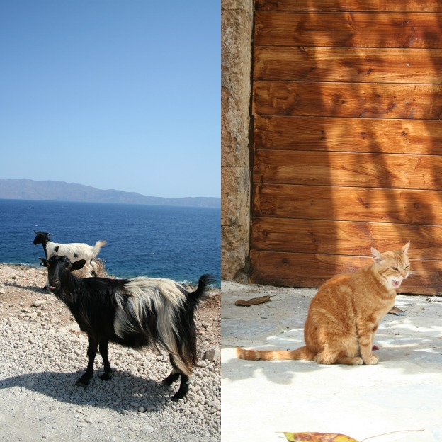 Goats and cat, Crete