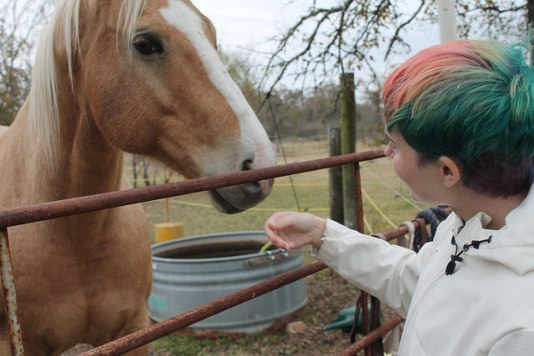 Person reaching out to pet a horse