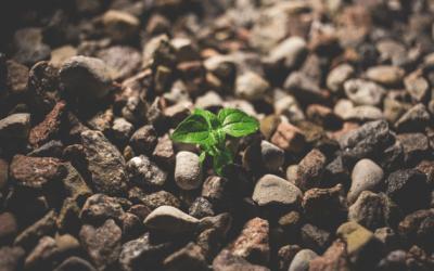 Planting Winning Habits