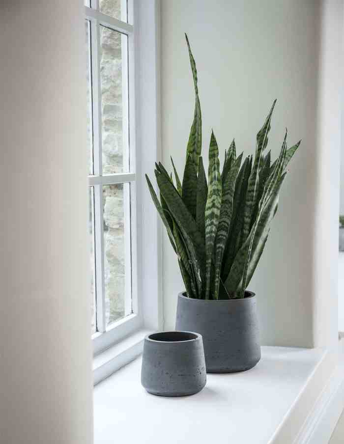 Tapered Concrete Plant Pots, Set of 2