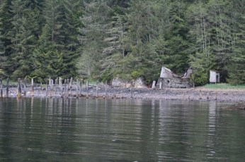 Ghosts of the Past in Union Bay; photo by Larry Rogers