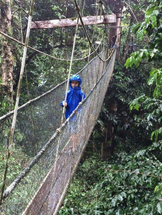 Skywalking in Gunung Mulu
