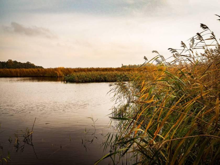 Das Sumpfgebiet ist ein Paradies für Vögel und Vogelbeobachter.